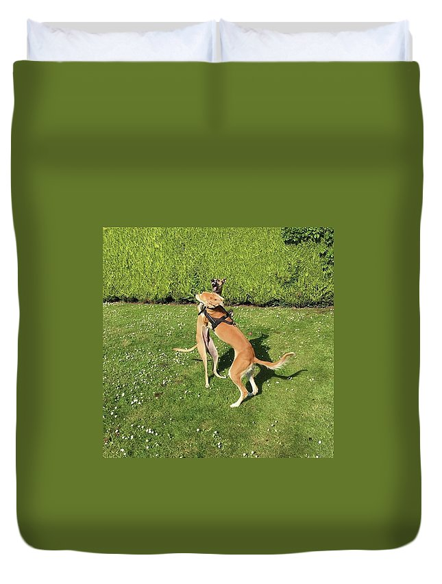 Persiangreyhound Duvet Cover featuring the photograph Ava The Saluki And Finly The Lurcher by John Edwards