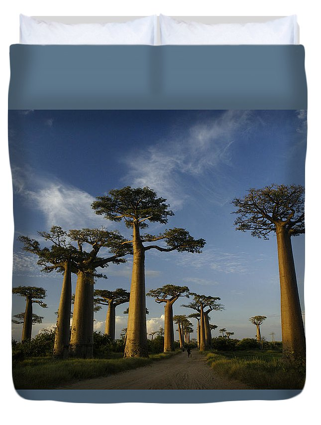 Madagascar Duvet Cover featuring the photograph Avenue Des Baobabs by Michele Burgess
