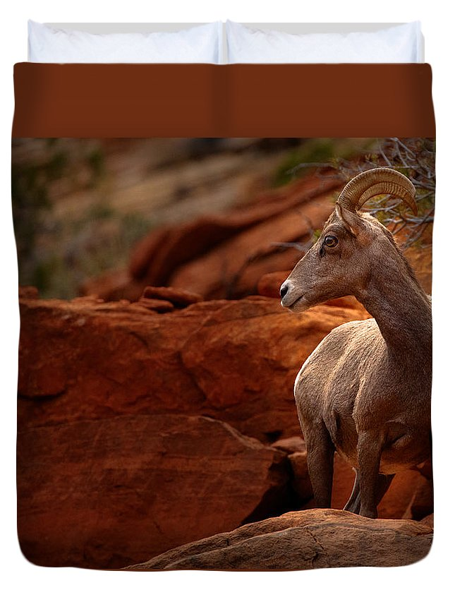 Tim Bryan Duvet Cover featuring the photograph Awareness by Tim Bryan