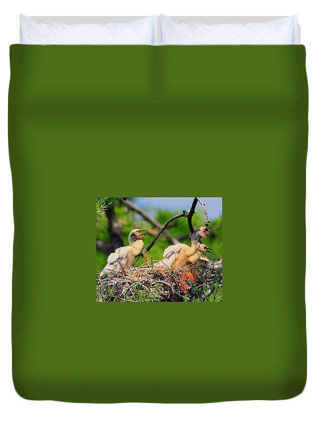 Anhinga Duvet Cover featuring the photograph Baby Anhinga Chicks by Barbara Bowen