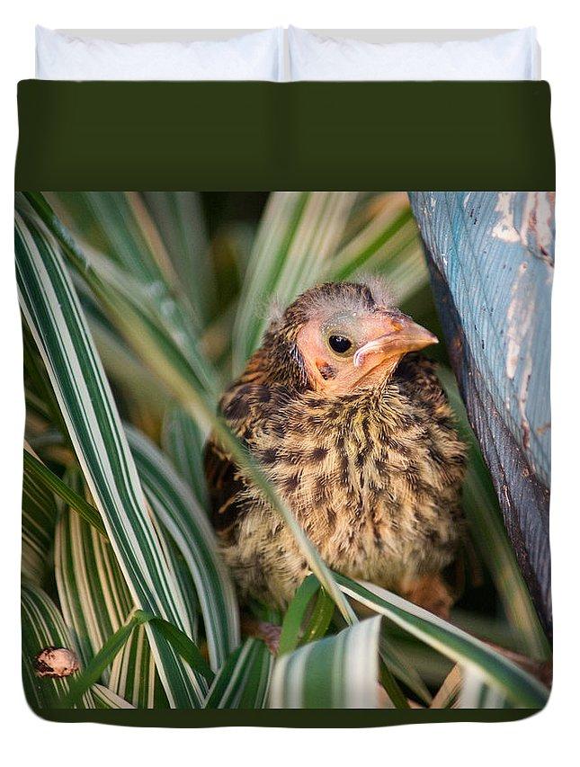 Baby Duvet Cover featuring the photograph Baby Bird Hiding In Grass by Douglas Barnett