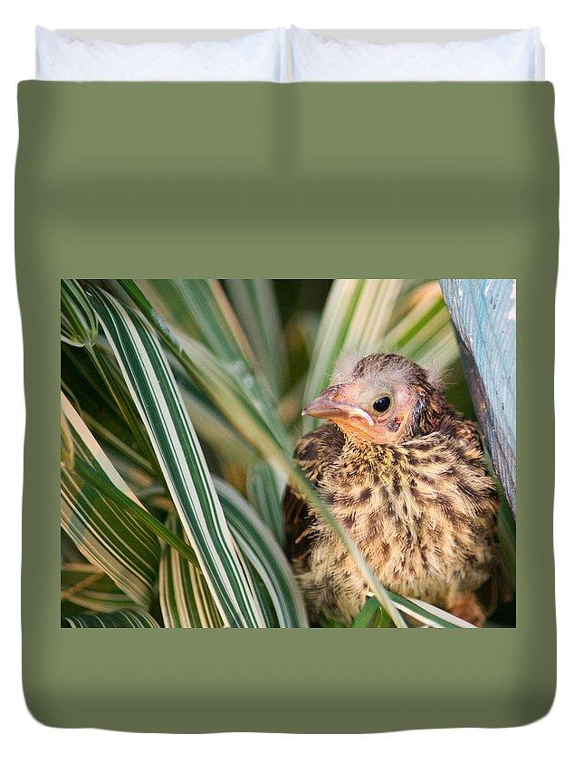 Bird Duvet Cover featuring the photograph Baby Bird Peering Out by Douglas Barnett