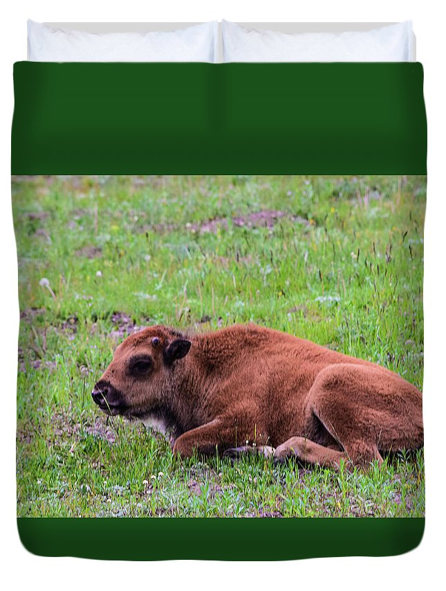 Buffalo Duvet Cover featuring the photograph Baby Bison by Bonny Puckett