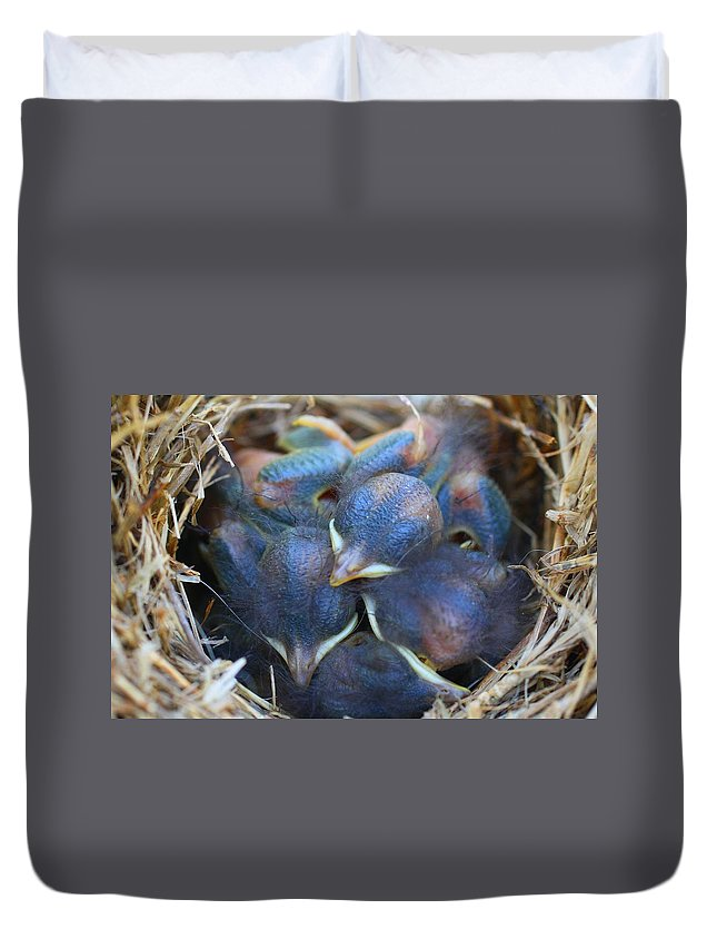 Bird Duvet Cover featuring the photograph Baby Bluebirds by Kathryn Meyer