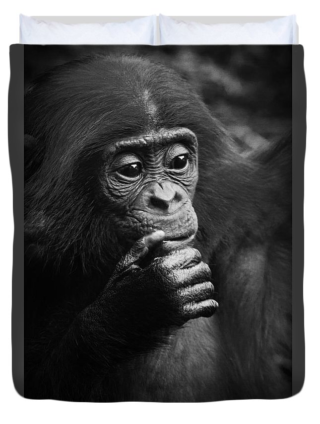 Bonobo Duvet Cover featuring the photograph Baby Bonobo by Heiko Koehrer-Wagner