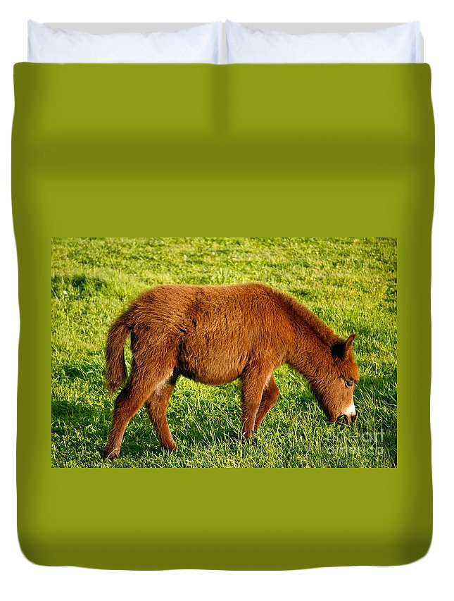 Animals Duvet Cover featuring the photograph Baby Donkey by Gaspar Avila