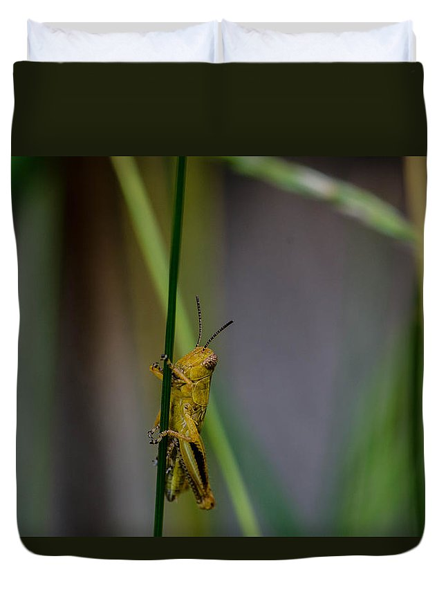 Baby Grasshopper Duvet Cover featuring the photograph Baby Grasshopper by Linda Howes