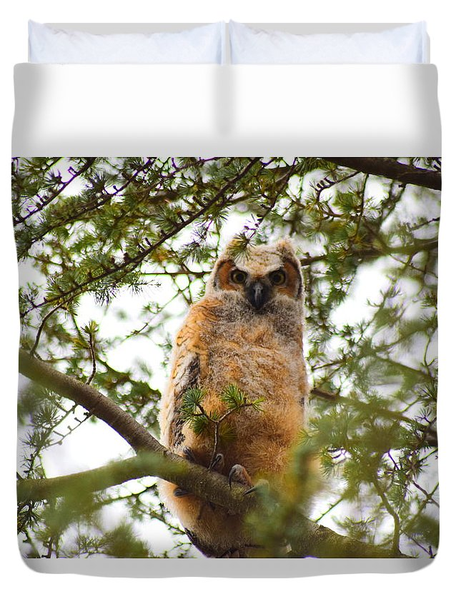 Owl Duvet Cover featuring the photograph Baby Great Horned Owl by Cheryl Braley