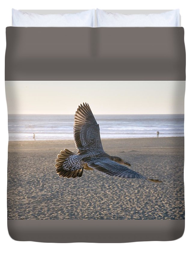 Flying Bird Photograph Duvet Cover featuring the photograph Baby Gull At Dusk by Daniel Furon