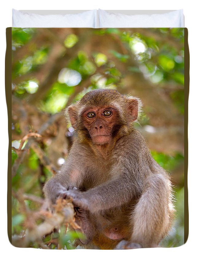 Dara Gor Duvet Cover featuring the photograph Baby Monkey by Dara Gor