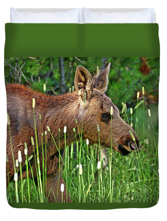 Moose Duvet Cover featuring the photograph Baby Moose by Scott Mahon