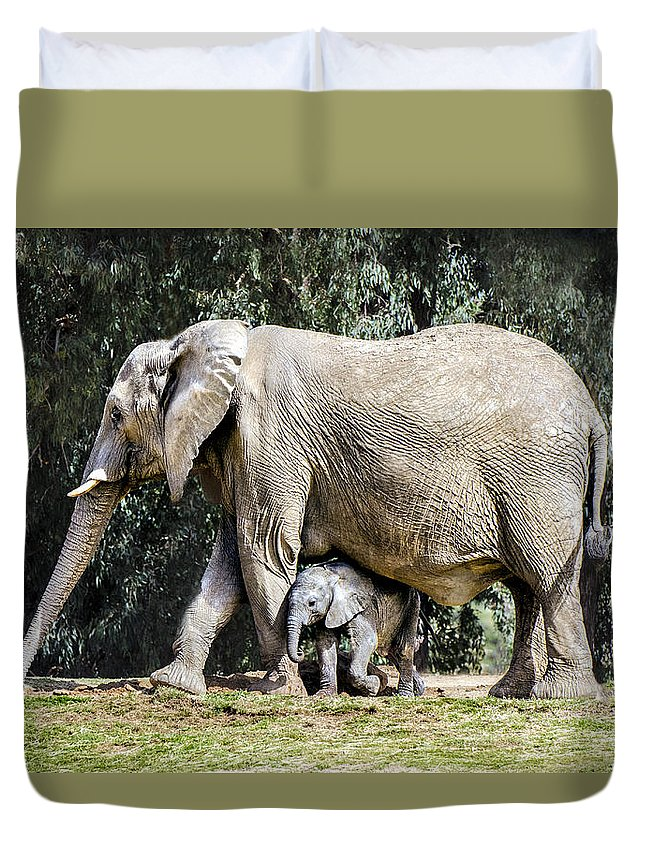 Elephant Duvet Cover featuring the photograph Baby Steps by William Bitman
