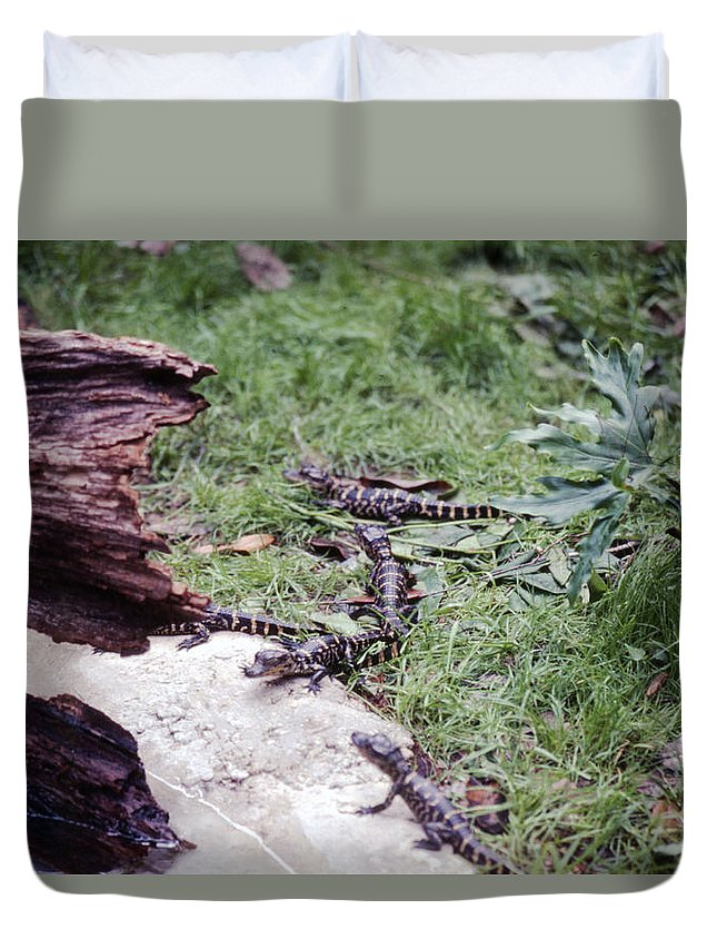 Crocodiles Duvet Cover featuring the photograph Babycrocs by Delbert Larkin
