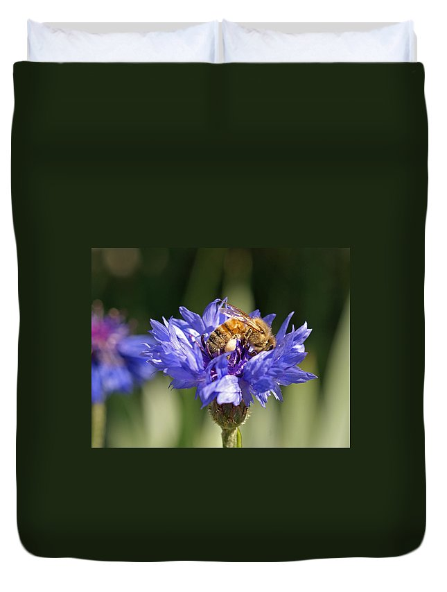 Bee. Flower Duvet Cover featuring the photograph Bachelor Button And Bee by Heather Coen