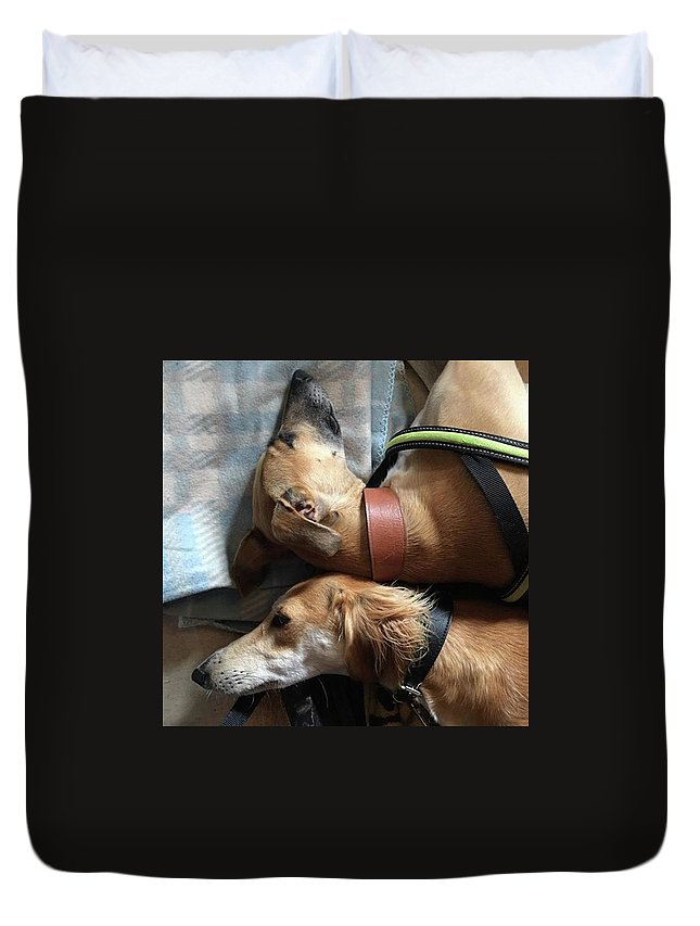 Persiangreyhound Duvet Cover featuring the photograph Back 2 Back - Ava And Finly Relaxing At by John Edwards