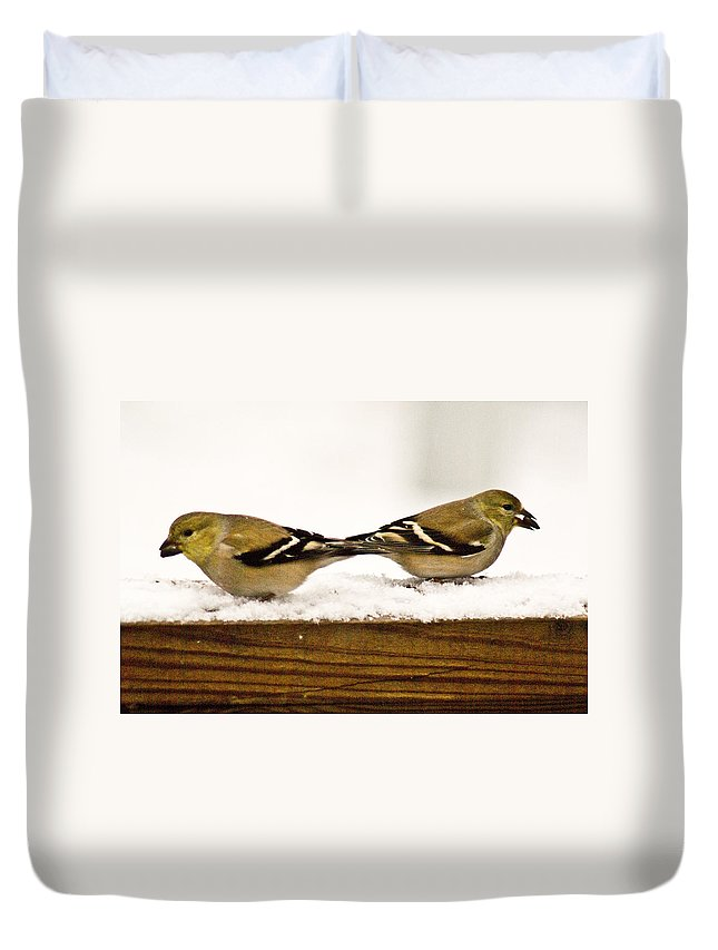 American Duvet Cover featuring the photograph Back To Back American Gold Finches by Douglas Barnett