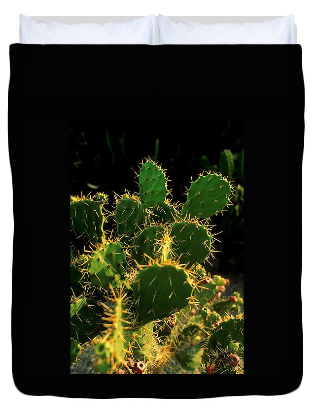 Cactus Duvet Cover featuring the photograph Backlit Cacti by Jerry McElroy