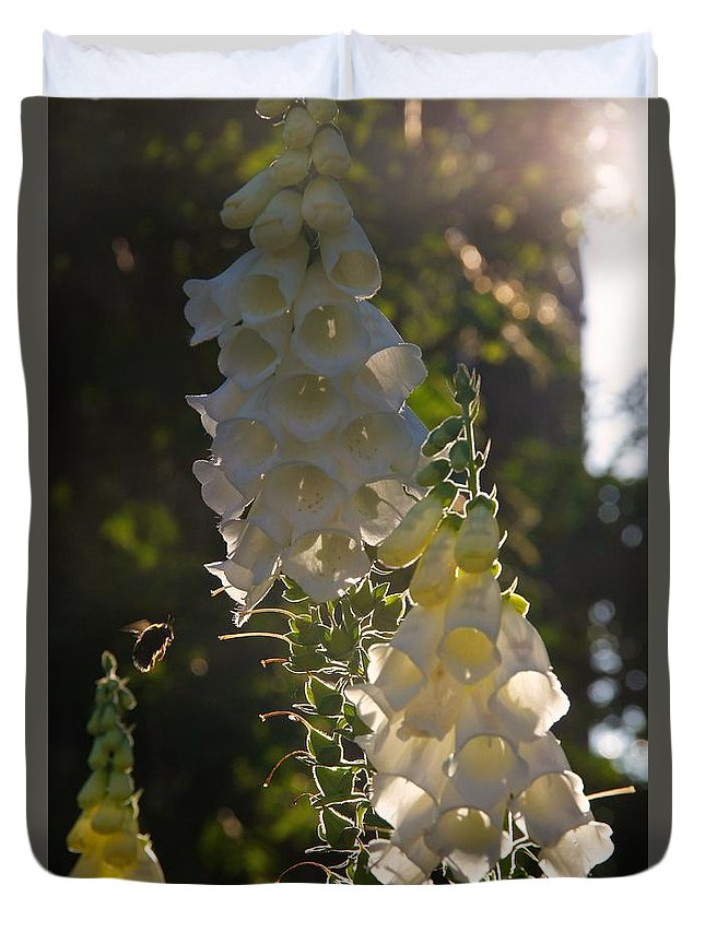 Nik Watt Duvet Cover featuring the photograph Backlit Foxgloves by Nik Watt