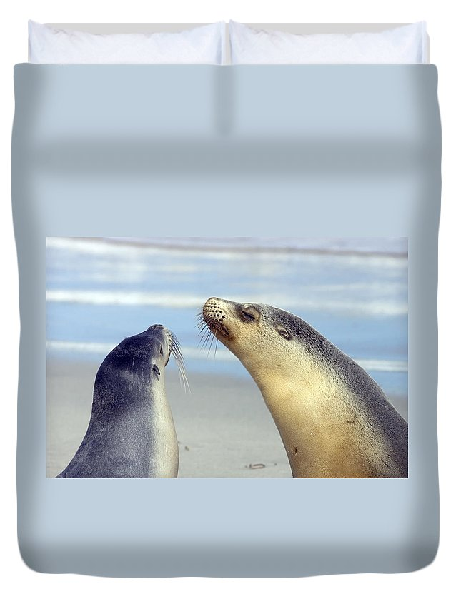 Sea Lion Duvet Cover featuring the photograph Backtalk by Mike Dawson