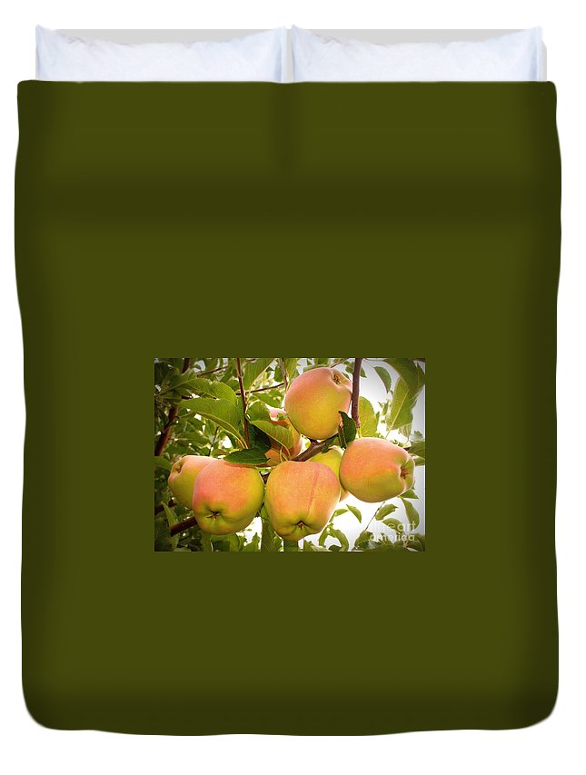 Fruits Duvet Cover featuring the photograph Backyard Garden Series - Apples In Apple Tree by Carol Groenen