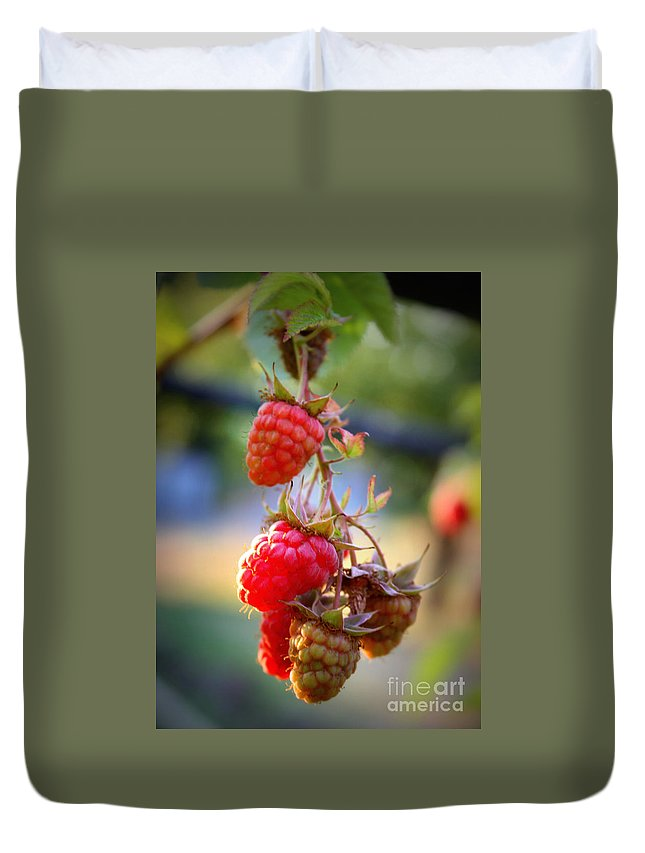 Food And Beverage Duvet Cover featuring the photograph Backyard Garden Series - The Freshest Raspberries by Carol Groenen