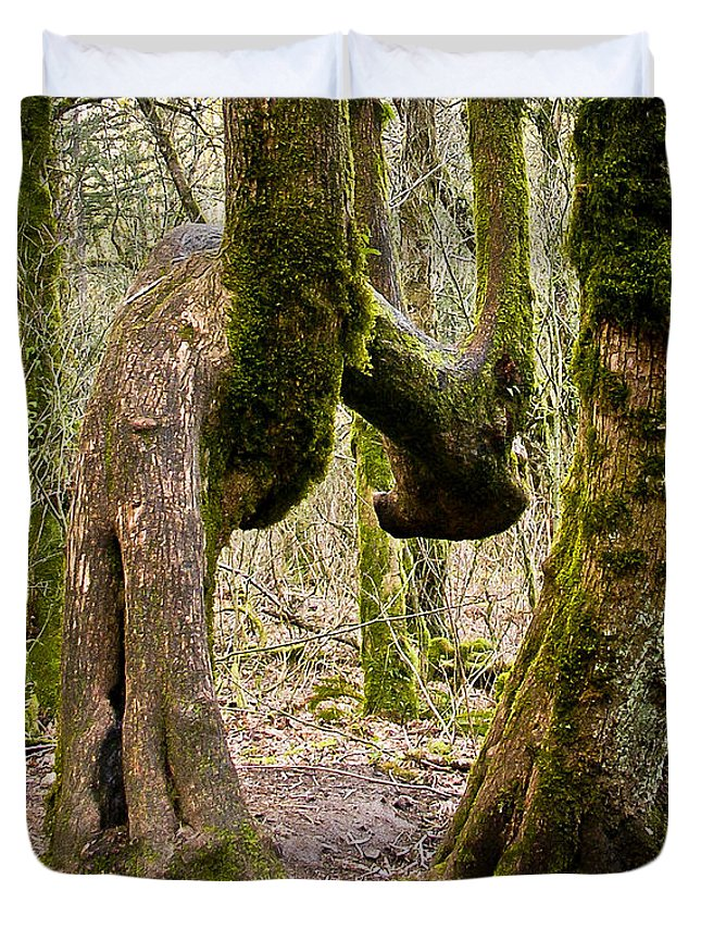 Trees Duvet Cover featuring the photograph Bad Back by Albert Seger