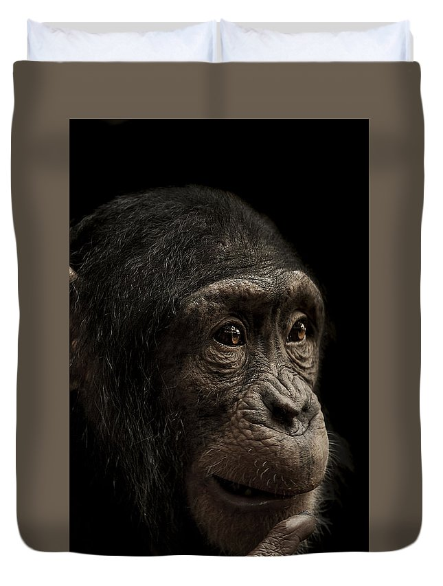 Chimpanzee Duvet Cover featuring the photograph Baffled by Paul Neville