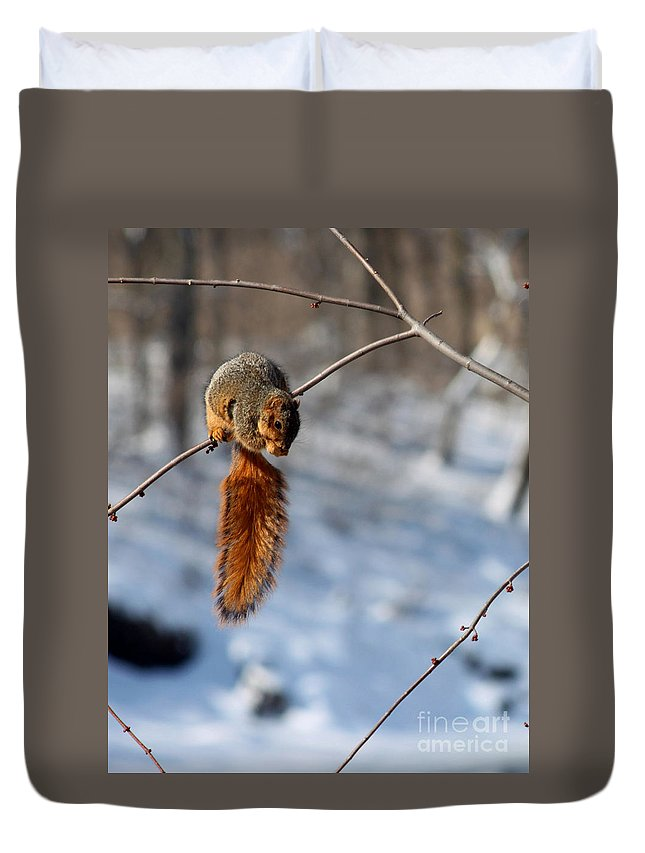 Potters Bridge Duvet Cover featuring the photograph Balancing Squirrel by Steve Gass