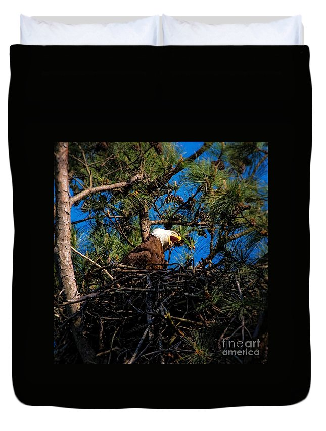 Bald Eagle In Nest Duvet Cover featuring the photograph Bald Eagle In The Nest by Warrena J Barnerd