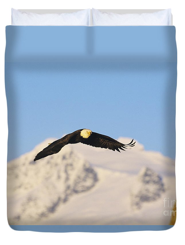 Afternoon Duvet Cover featuring the photograph Bald Eagle Flying In Alaska by John Hyde - Printscapes