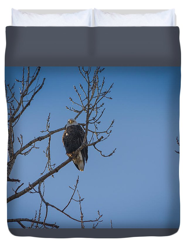 Bald Eagle Duvet Cover featuring the photograph Bald Eagle In Tree by Mike Cox