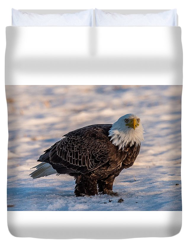 Bald Eagle Duvet Cover featuring the photograph Bald Eagle Over Its Prey by Paul Freidlund
