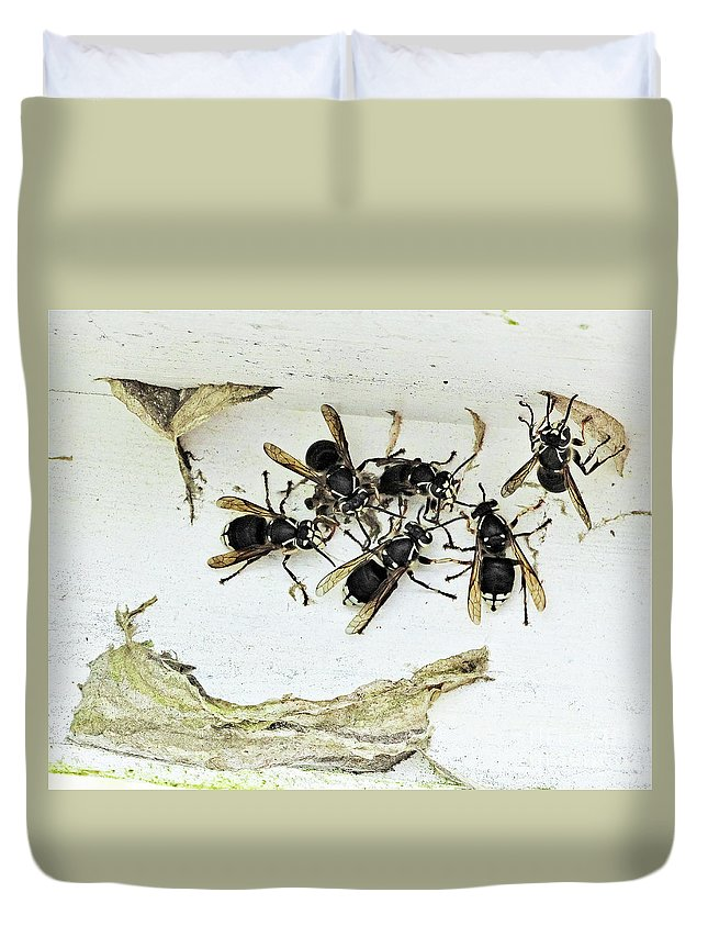 Bald Faced Hornets Paper Nests Lake St Catherine Poultney Wells Vermont Duvet Cover featuring the photograph Bald Faced Hornets by Karen Velsor