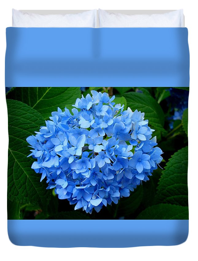 Hydrangea Duvet Cover featuring the photograph Ball Of Blue by Michiale Schneider