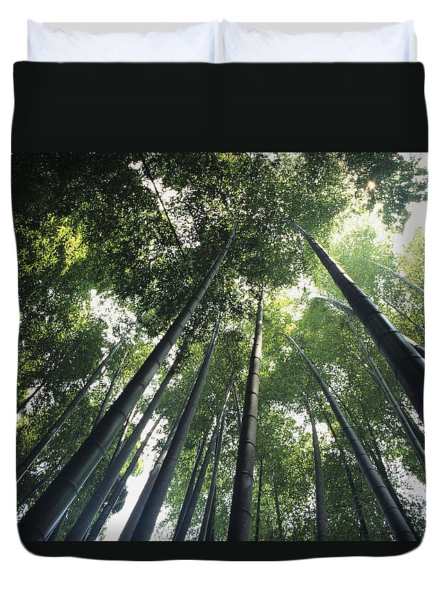 Area Duvet Cover featuring the photograph Bamboo Forest by Mitch Warner - Printscapes