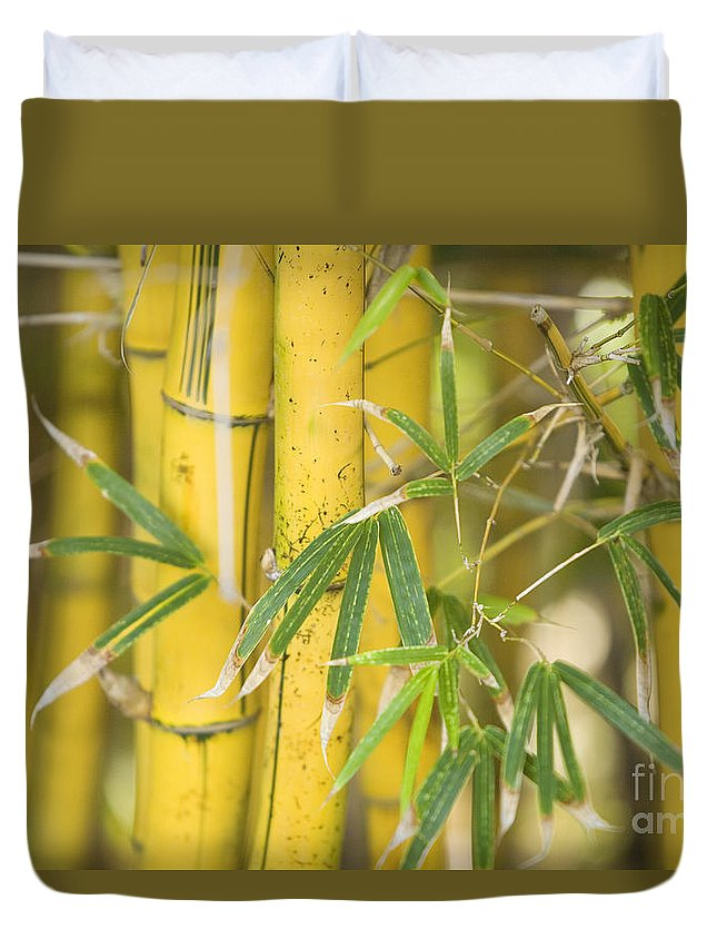 66-csm0193 Duvet Cover featuring the photograph Bamboo Stalks by Ron Dahlquist - Printscapes