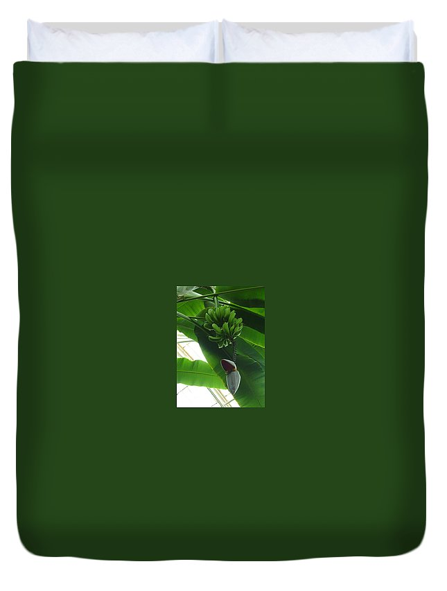 Kew Duvet Cover featuring the photograph Banana Plant Kew London England by Heather Lennox