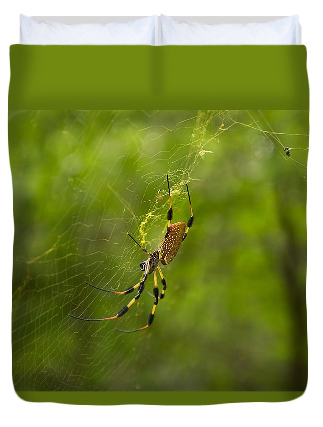 Spider Duvet Cover featuring the photograph Banana Spider by Christopher L Thomley