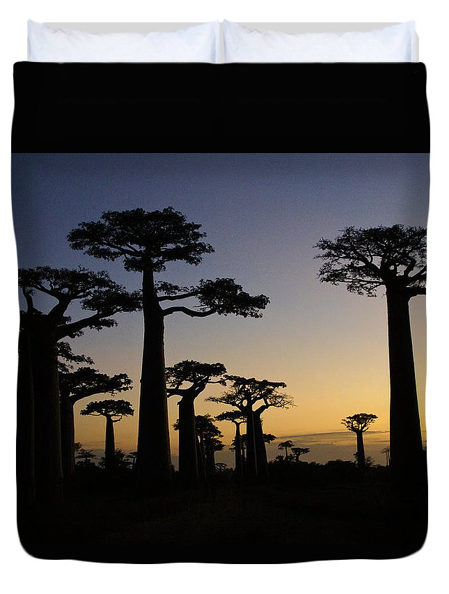 Madagascar Duvet Cover featuring the photograph Baobab Forest At Sunset by Michele Burgess