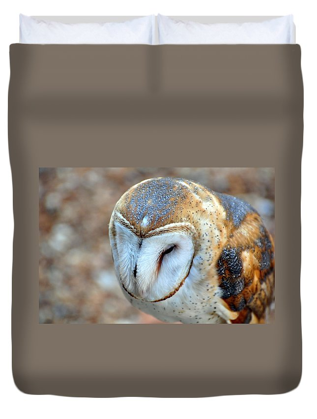 Owl Duvet Cover featuring the photograph Barn Owle 1 by Marty Koch