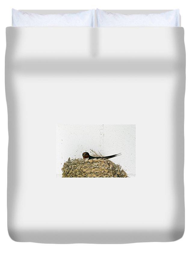 Barn Duvet Cover featuring the photograph Barn Swallow Nesting by Douglas Barnett