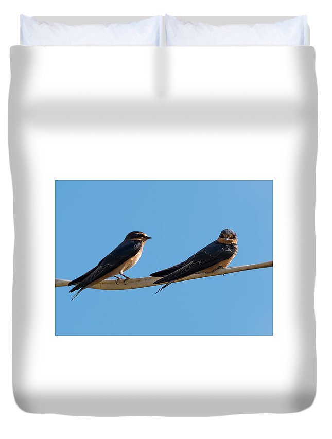 Barn Swallows Duvet Cover featuring the photograph Barn Swallows by Jan M Holden