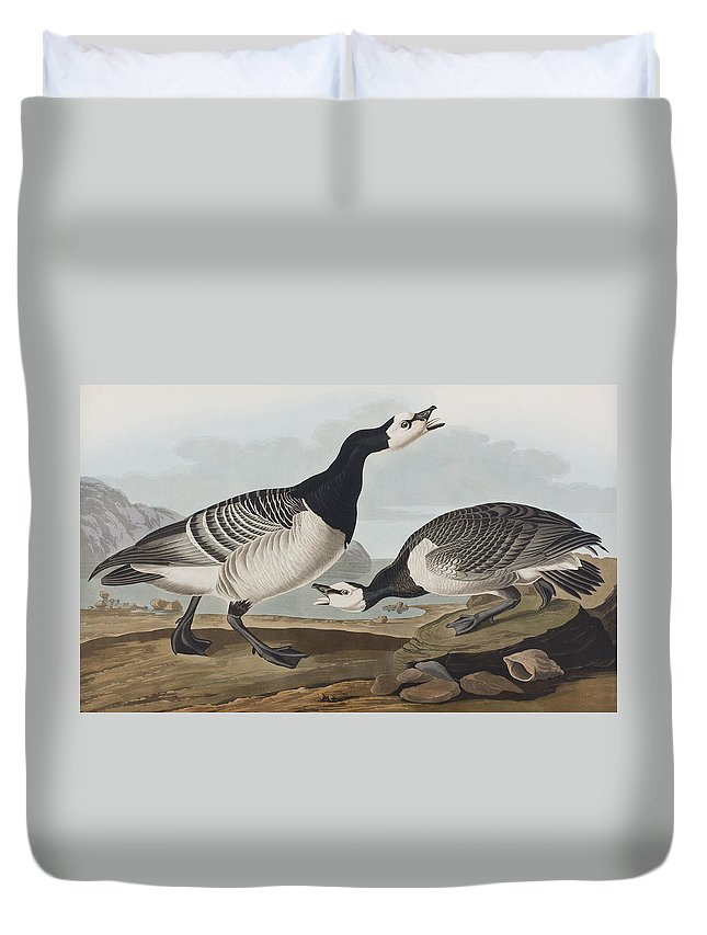 Barnacle Goose Duvet Cover featuring the painting Barnacle Goose by John James Audubon