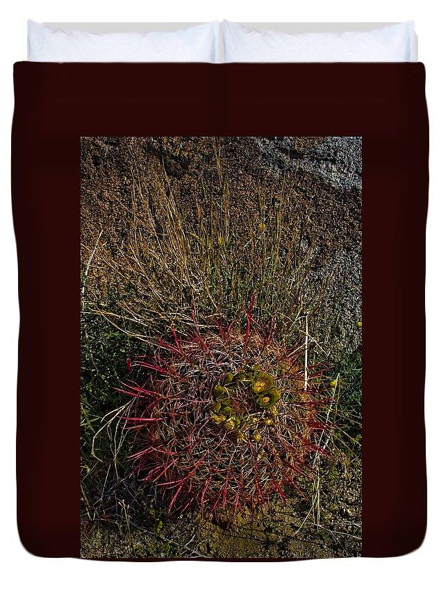 Barrel Cactus Duvet Cover featuring the photograph Barrel Cactus Top View by Chris Brannen