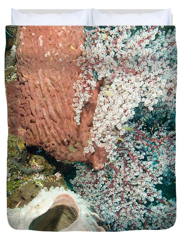 Coral Duvet Cover featuring the photograph Barrell Sponges And Sea Fans by Tim Laman
