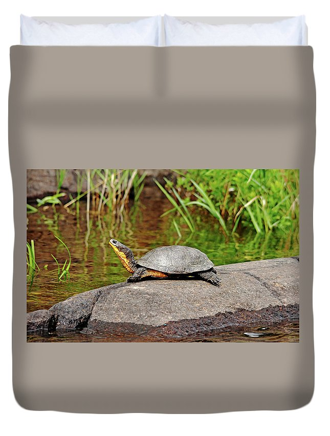 Blanding's Turtle Duvet Cover featuring the photograph Basking Blanding's Turtle by Debbie Oppermann