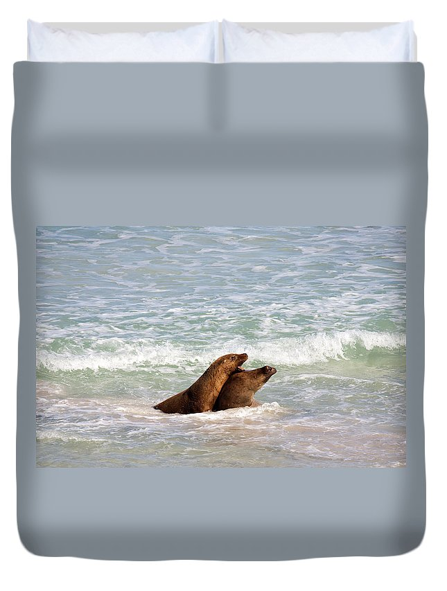 Sea Lion Duvet Cover featuring the photograph Battle For The Beach by Mike Dawson