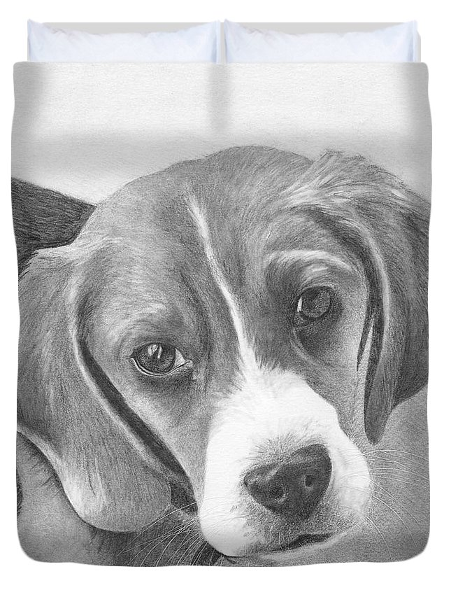 Beagle Duvet Cover featuring the drawing Beagle by Karen Townsend