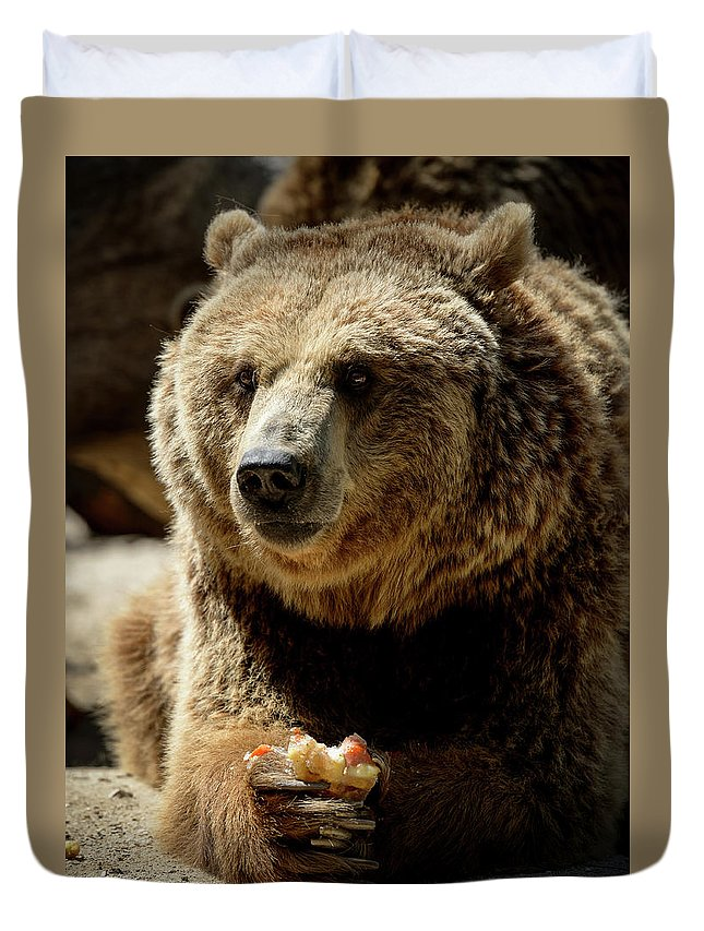 Bear Duvet Cover featuring the photograph Bear 5 by Dani Pozo