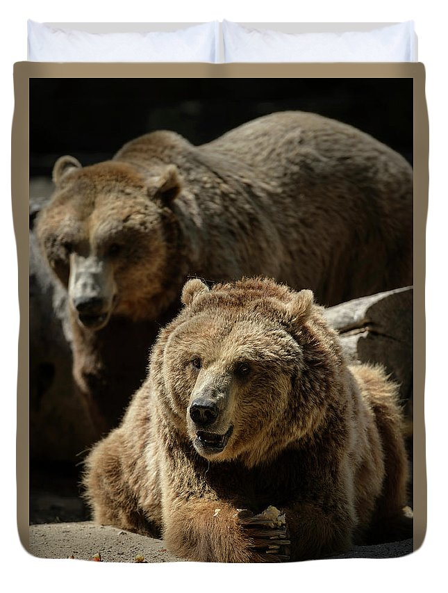 Bear Duvet Cover featuring the photograph Bears 6 by Dani Pozo